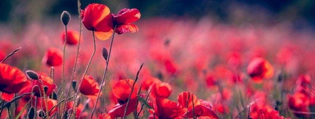 Рутинна грижа за кожа с розацея